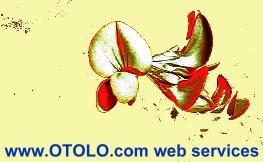 otolo.com/webworx logo